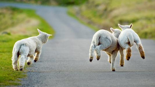 2019年1月26日M20梦次元冬日祭动漫展-今天开始放羊!寒假第一Zhan!